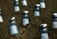 missionary salt of earth
